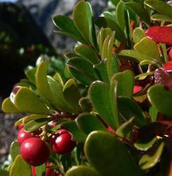 plantasbelleza2